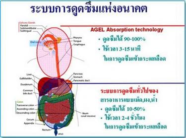 Agel Absorption System : ระบบการดูดซึมแห่งอนาคตของ เอเจล